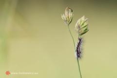 flora012