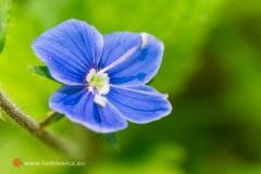 flora051