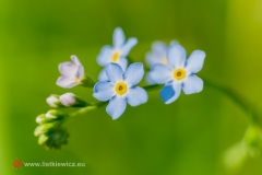 flora054