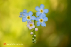flora055