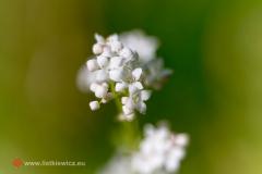flora058