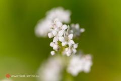 flora059