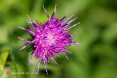 flora060