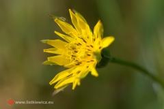 flora061