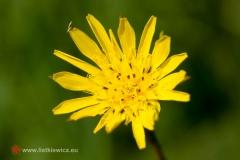 flora062