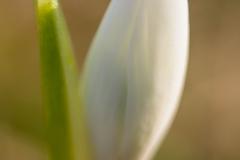 flora068