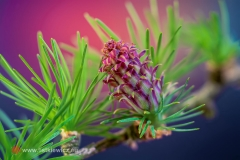 flora094