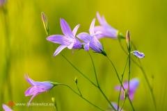 flora095