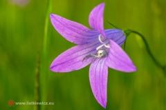 flora098