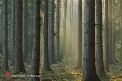 krajobrazy011