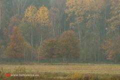 krajobrazy034