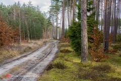 krajobrazy139