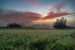 Nadwiślańskie łąki na kilka chwil przed wschodem słońca