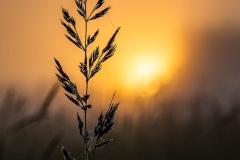 O wschodzie słońca