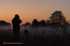 Na moim podwórku wstaje nowy dzień, Rokita (fot. Rafał Pajestka)