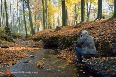 Gdzieś w lesie, Rokita (fot. Rafał Pajestka)