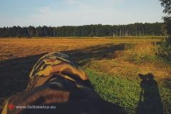 Gdzieś na łąkach, Rokita