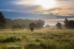 Rokickie łąki (fot. Rafał Pajestka)